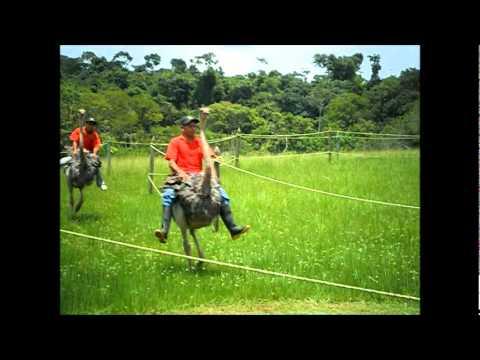 Zooparque Los Caimanes (Carreras de avestruces)