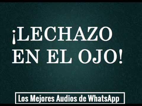 LECHAZO EN EL OJO - Los Mejores Audios de WhatsApp
