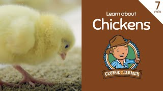 Learn about chickens with George the Farmer