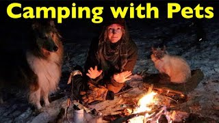 Winter Camping with my CAT & DOG | Bushcraft Shelter