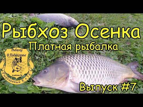 платная рыбалка в подмосковье рыбхоз