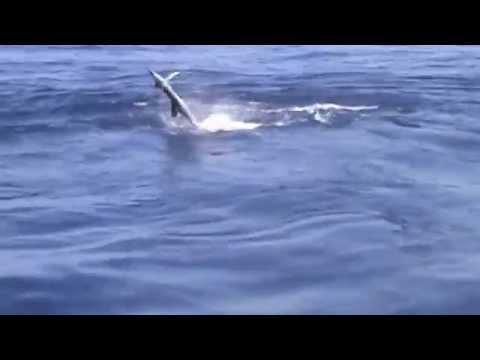 Los Suenos Fishing | Chaser Sport Fishing in Costa Rica