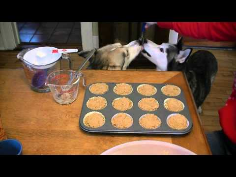 Homemade Birthday Pumpkin Dog Muffins Siberian Husky Treats Recipe