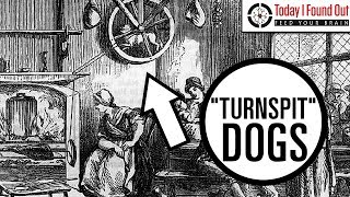 The Curious Tale of Turnspit Dogs (Re-Issue)