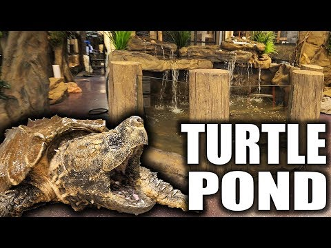 ALLIGATOR SNAPPING TURTLE POND!!!   The king of DIY