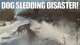 What Happens When You Fall Off Your Dog Sled | A Musher's Nightmare!