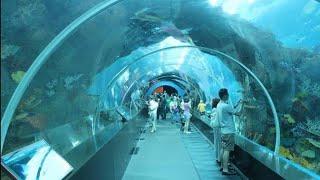 SEA Aquarium Singapore 2019 , Resorts World Sentosa