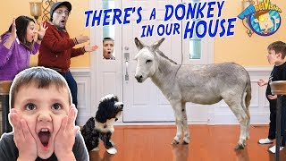 DONKEY in our HOUSE!!! Meet the Newest Family Member, WOODROW! (FUNnel Fam Farm Vlog)