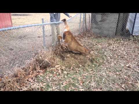Benjamin saves the deer.