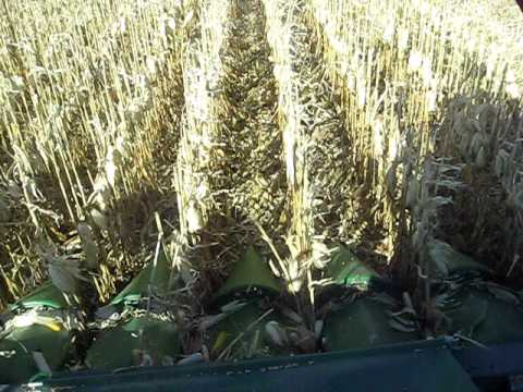 Capello Corn Head 2011 Harvest