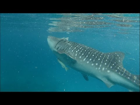 Diving in Cebu and Bohol in the Philippines