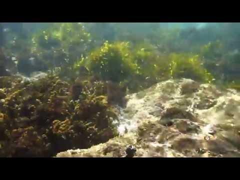 snorkel - toowoon bay