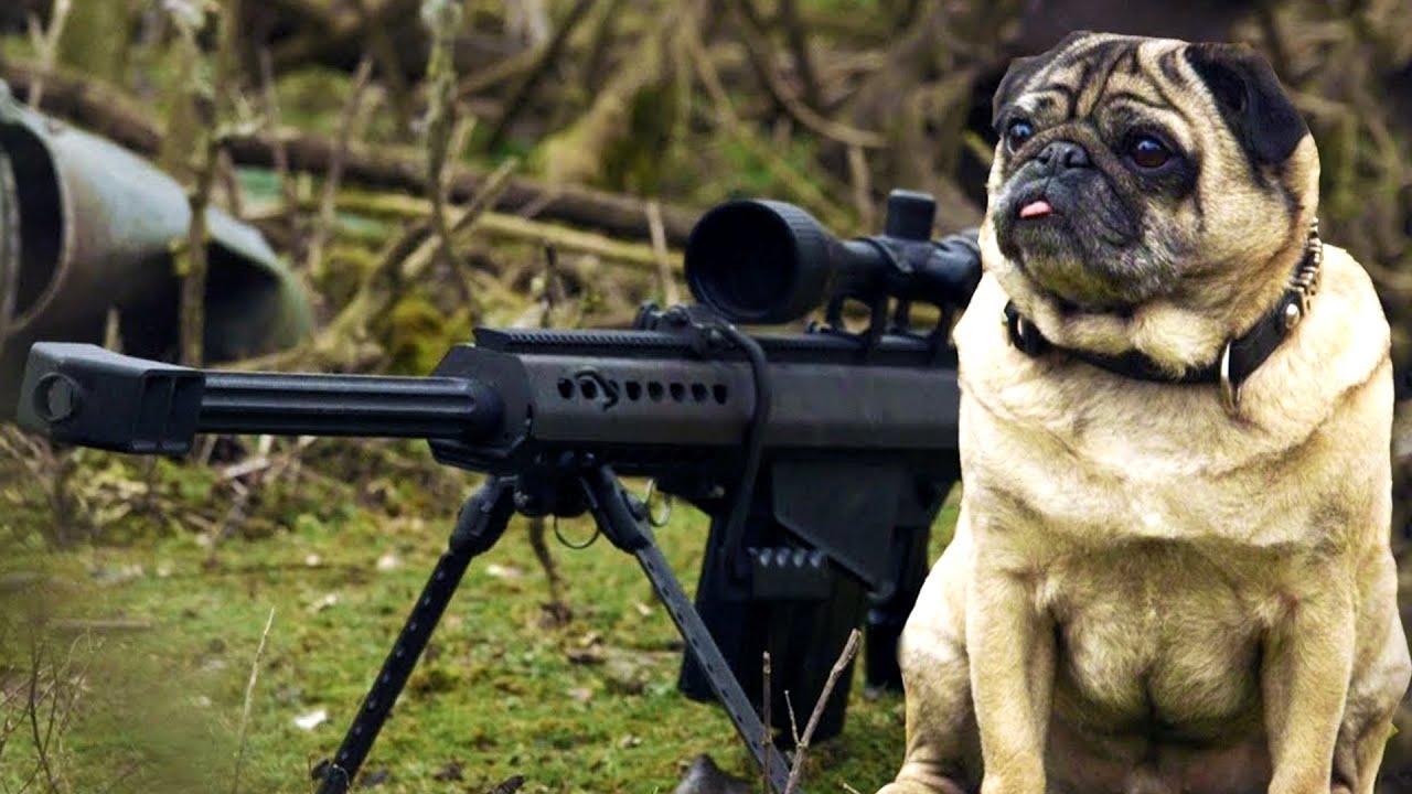 sniper pug youtube