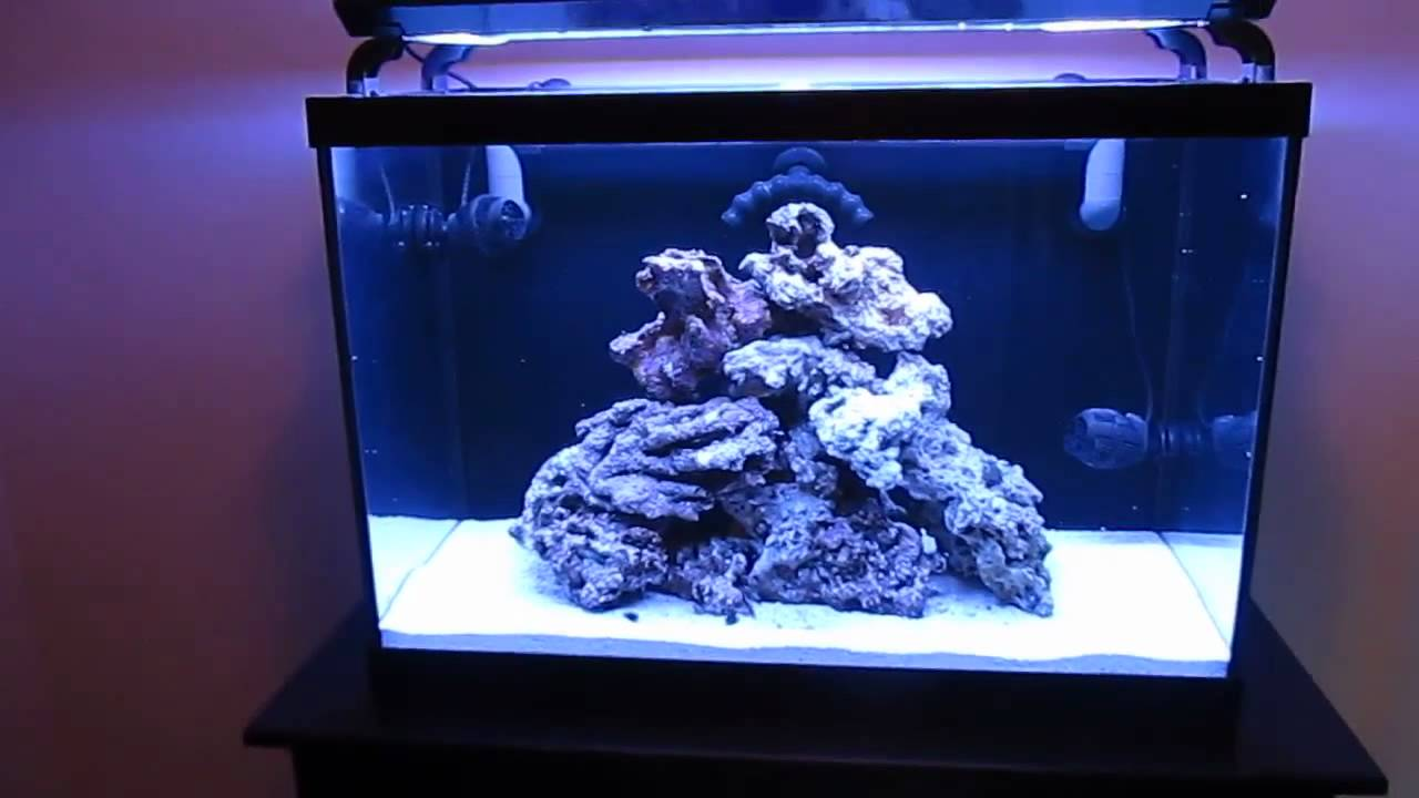 Saltwater aquarium project 65 gallon finished cycling for Cycling a fish tank