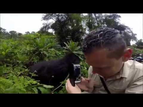 Steppes Travel | Gorilla Trekking, Rwanda