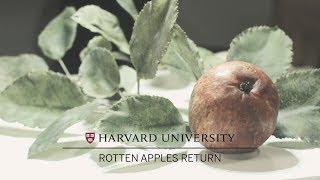 Rotten Apples Return to Harvard's Glass Flowers exhibition