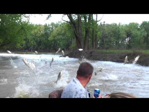 Wabash River Asian Carp Attack
