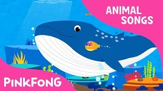 Whoosh, Blue Whale | Blue Whale | Animal Songs | Pinkfong Songs for Children