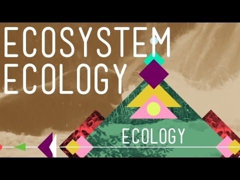 Ecosystem Ecology: Links In The Chain - Crash Course Ecology #7 video