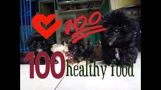 Healthy food for Shih Tzu dog [HD video]