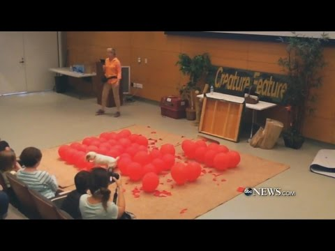 Dog Breaks World Record For Popping Balloons   ABC News