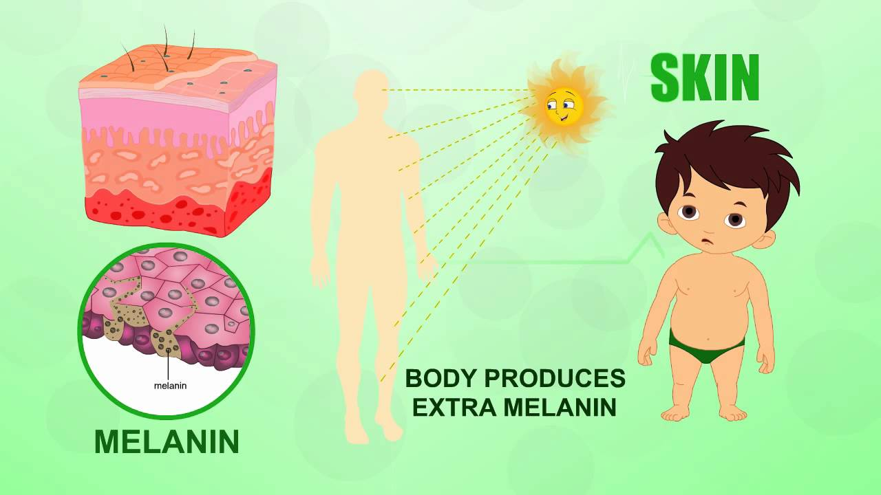 Skin Human Body Parts Pre School Animated Videos For