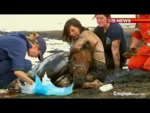 Horse recovering well after sinking in mud