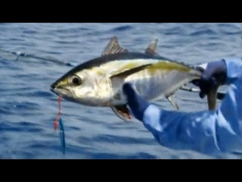 How to Catch Tuna using Butterfly Jigs