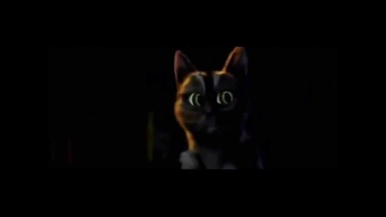 Ohhh cat gif