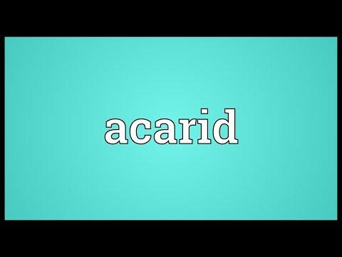 Header of acarid
