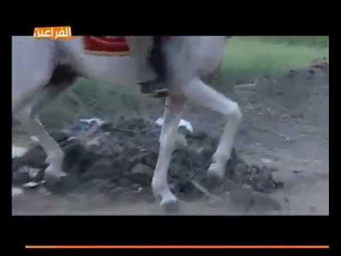 حمار راكب حصان لا تخرج قبل ان تقول سبحان الل�