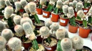 Cuautla, Edo. Morelos México CONAPLOR (6-6) Cactus.wmv