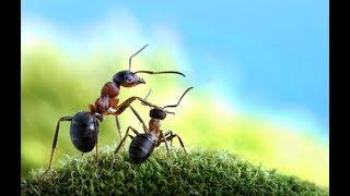 NN Channel Hoạt hình cho bé yêu - Cuộc sống loài kiến nhỏ bé