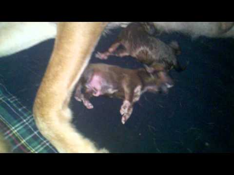 My Dog And Her Six New Pups video
