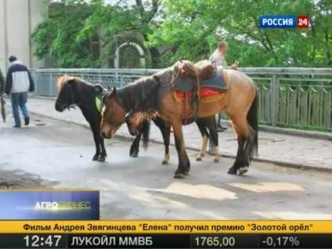 Агробизнес от 28.01.2012. Москвичи калечат лошадей!