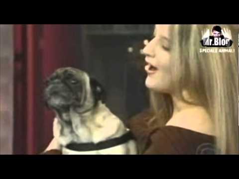 Stop alla strage dei cani in Ucraina, no all'abbandono. Speciale Mr Blog