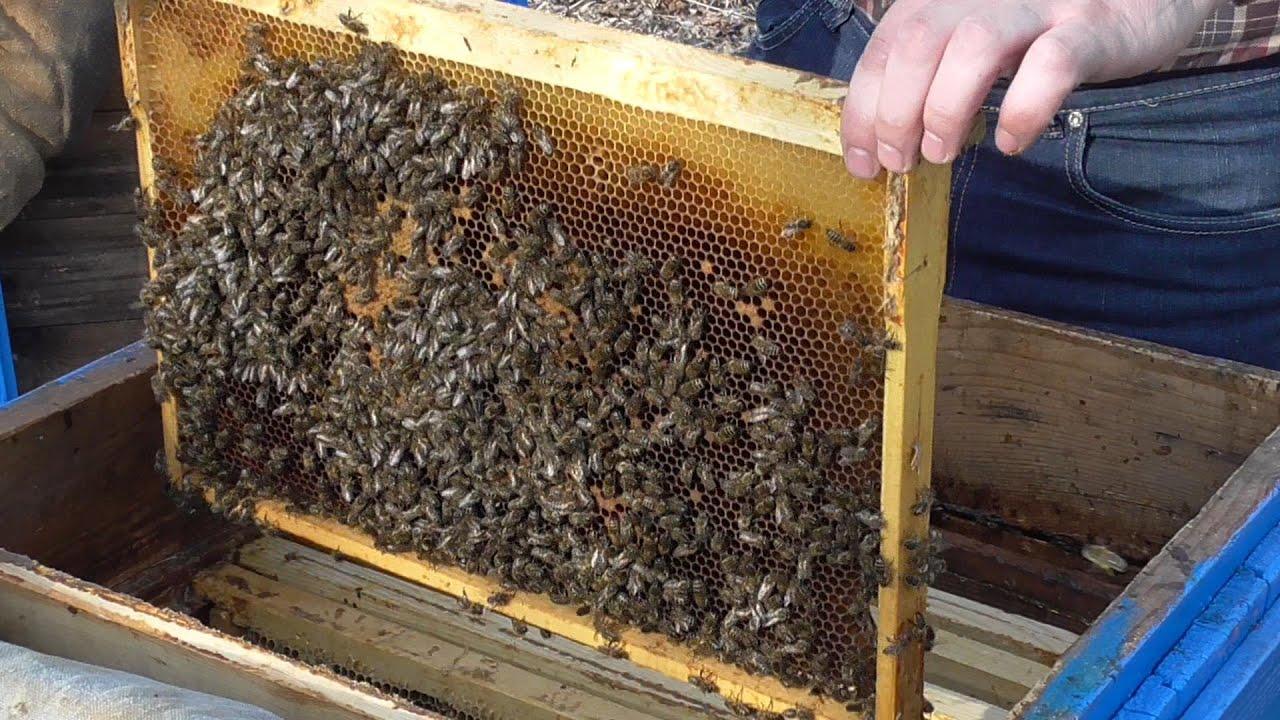 Как сделать подкормку пчелам