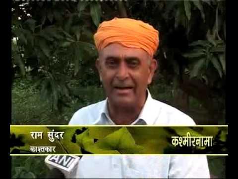 Organic Basmati rice in R S Pura