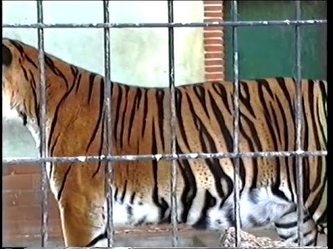 Jardim Zoológico de Lisboa (2ª parte)