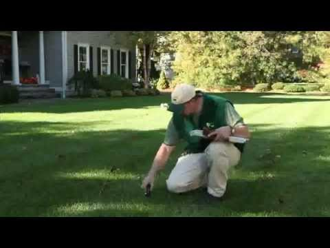 Noon Turf Care Services - The leader in Lawn, Tree & Shrub Care and Pest Control