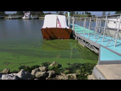 Toxic Algae Abounds Despite Prevention Efforts