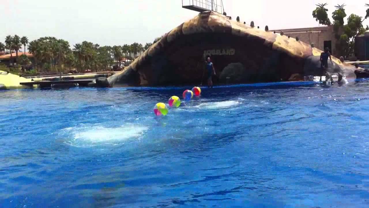 Dolphin show at aqua land tenerife best dolphin show in - Aqua tenerife ...