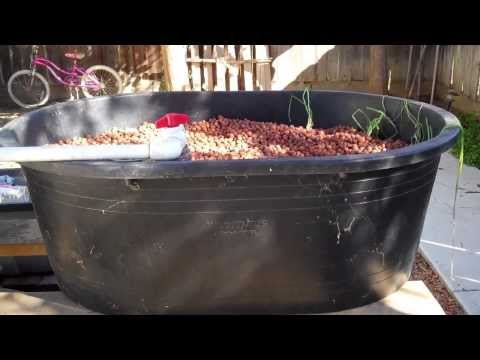 Aquaponics   Complete System Walkthrough