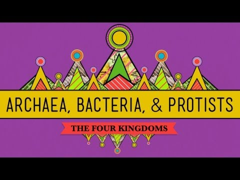 Old & Odd: Archaea, Bacteria & Protists - Crashcourse Biology #35 video