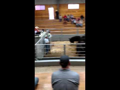 Denison livestock auction