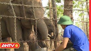 Chung tay xây dựng ngôi nhà thiên nhiên, bảo vệ động vật hoang dã | An toàn sống | ANTV
