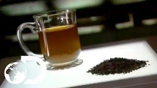 Tea | How It's Made