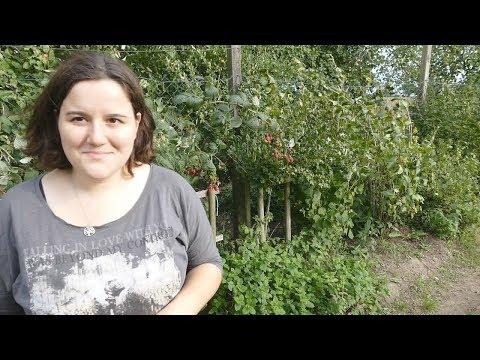 Im September einsähen,... | Viel zu tun im Garten | Vlog #16 |