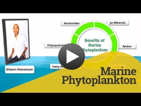 Marine Phytoplankton | Marine Phytoplankton found to have incredible health benefits
