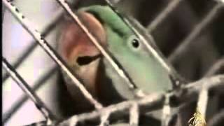 Parrot Reciting Quran